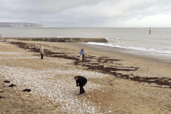 Sandown Bay Isle of Wight