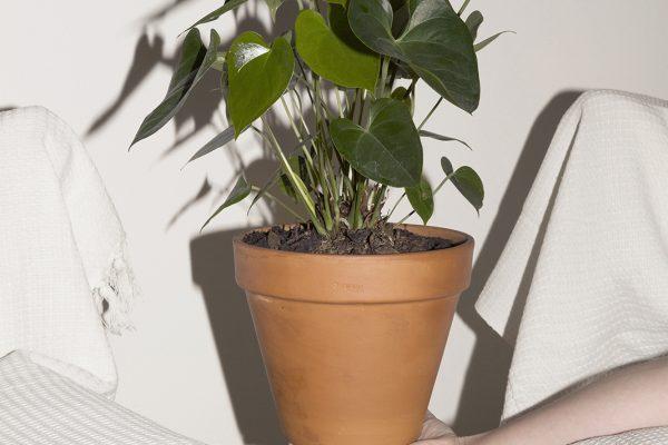 'Plant 1' (2014)
