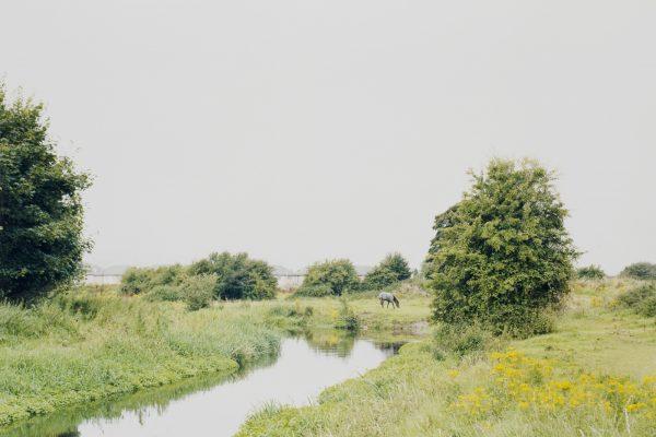 At Mirrored River, Enda Bowe